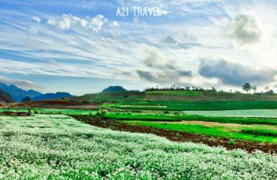 Tour du lịch Mộc Châu
